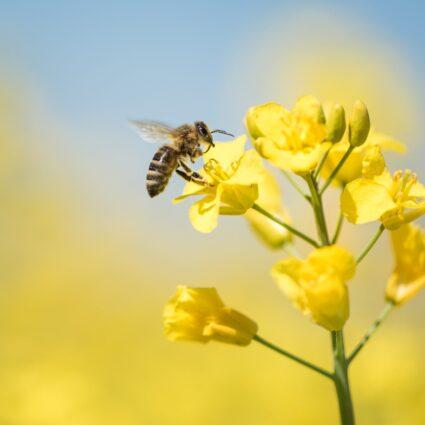 Incontri con le api